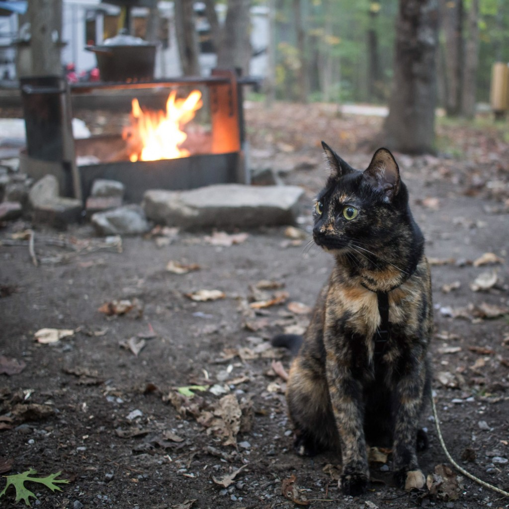 cat by campfire