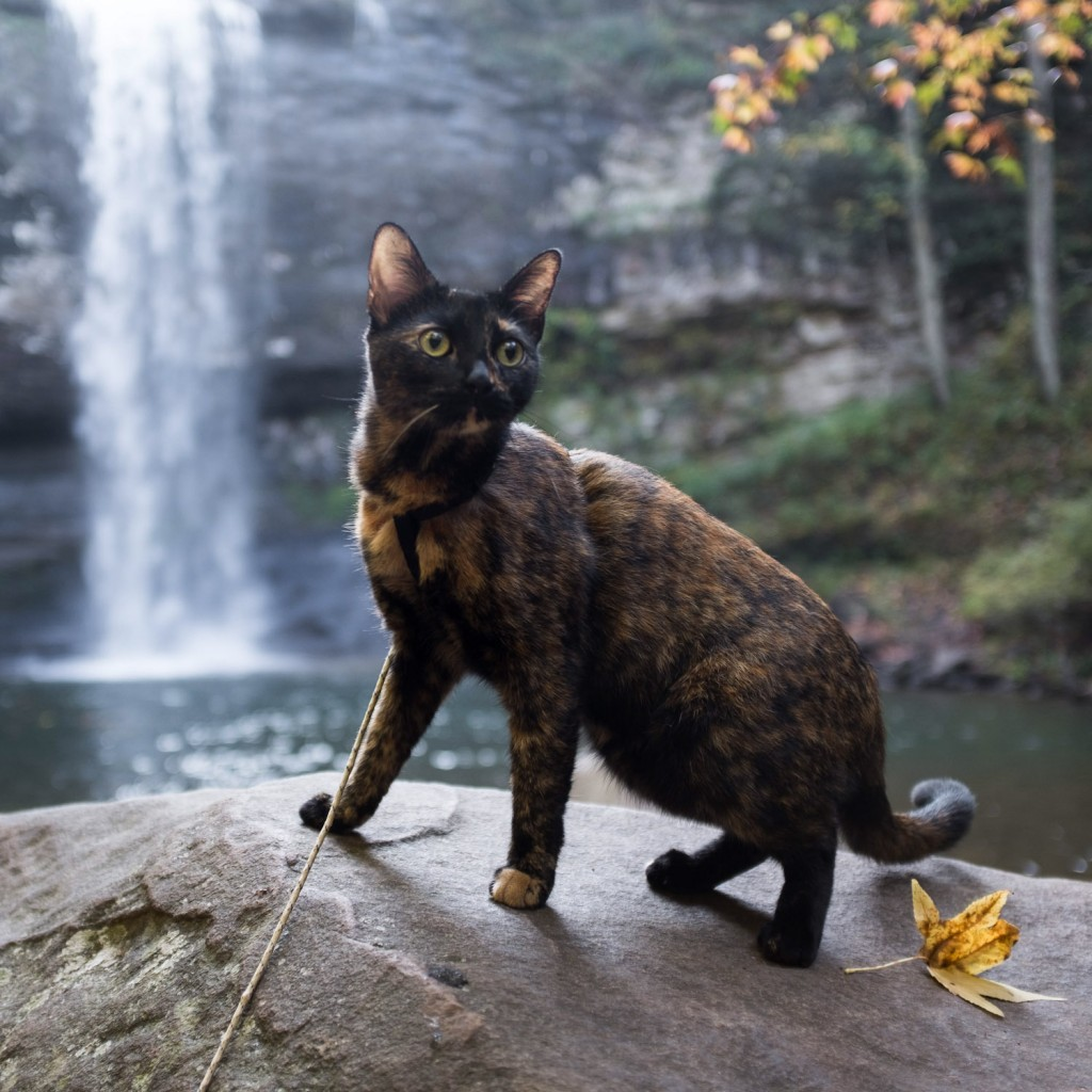 cat with waterfall