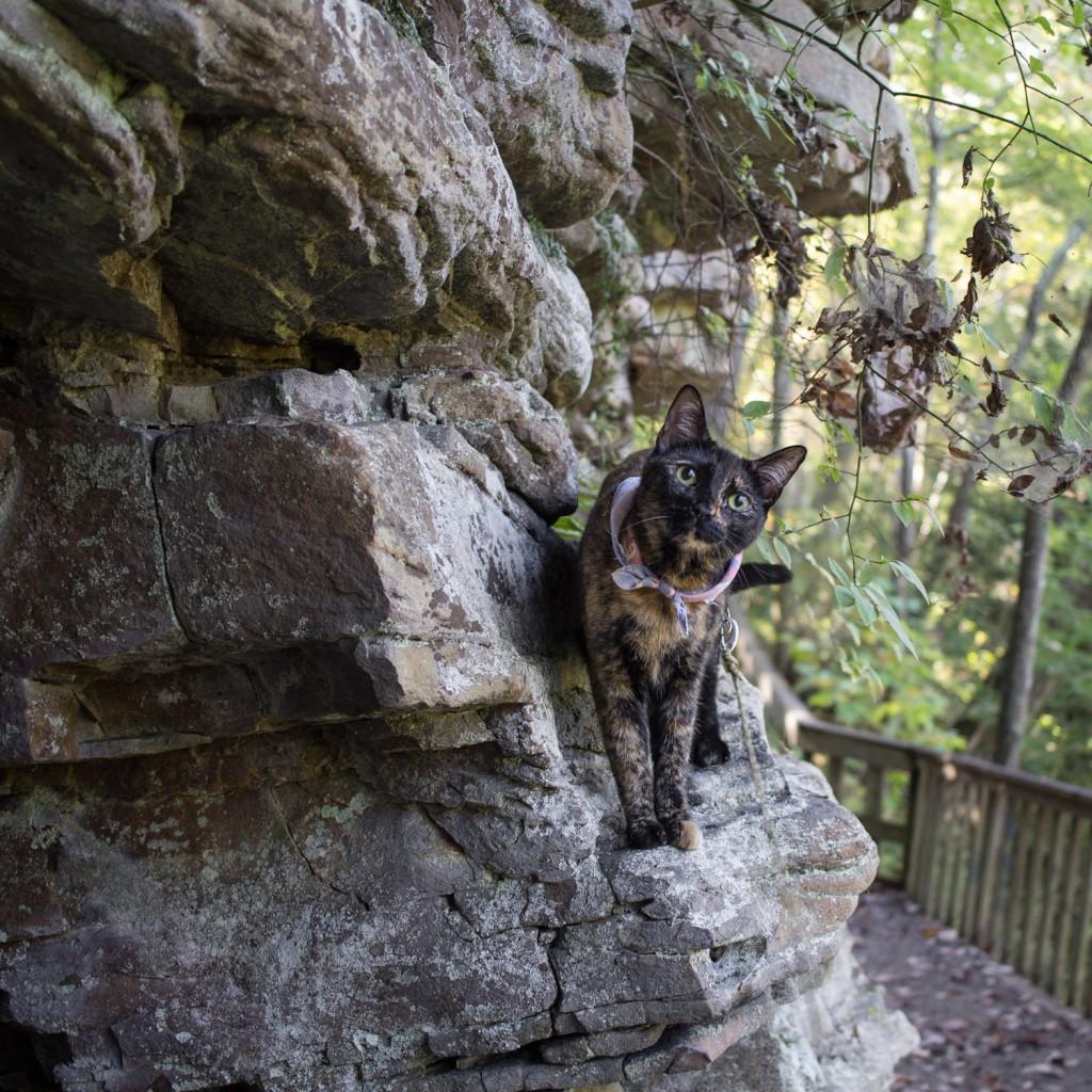 cat wearing bandana on hike