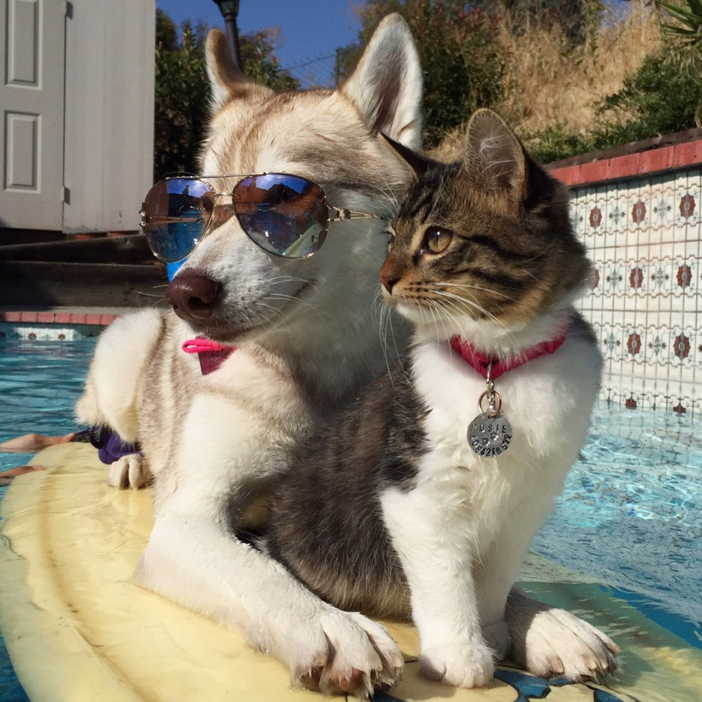 cat and dog in pool