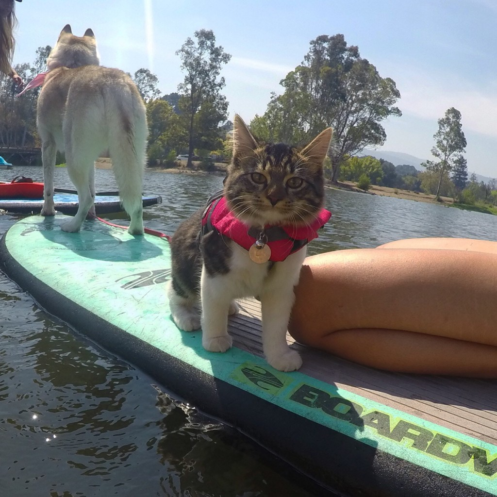 cat and dog on paddle board