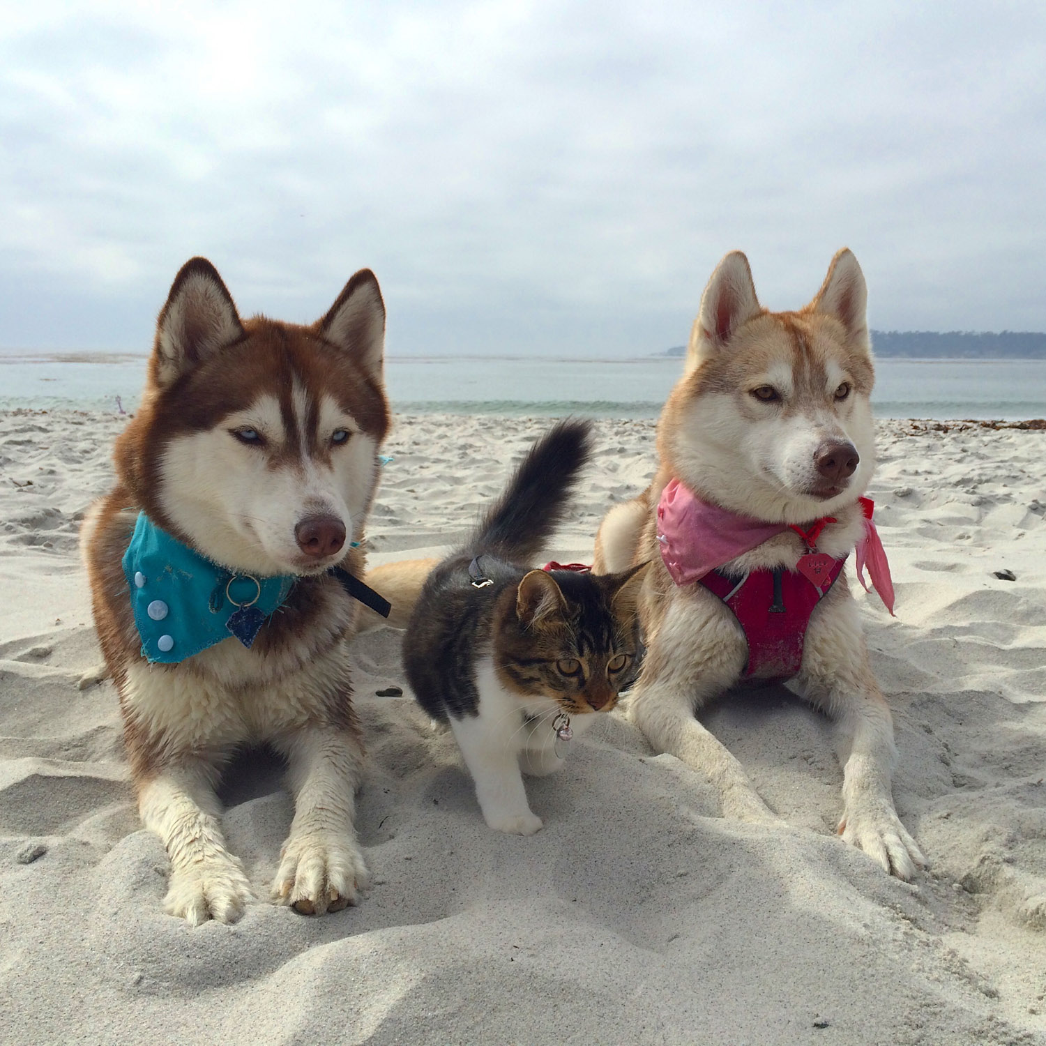 Cat Dog Walking Together