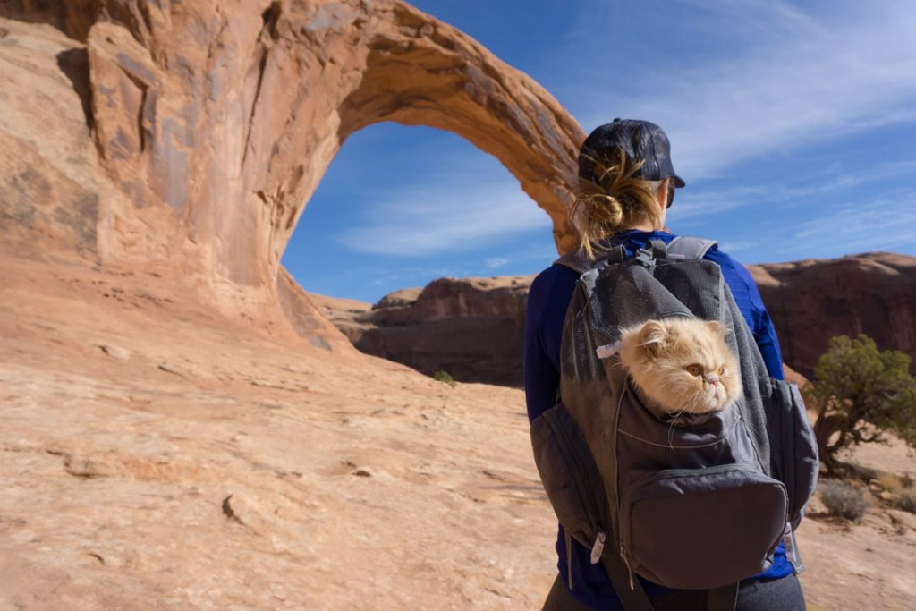 cat in backpack in desert