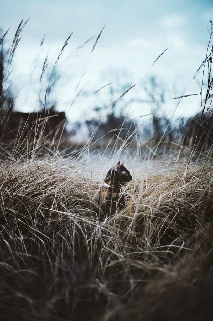 adventure cat in field