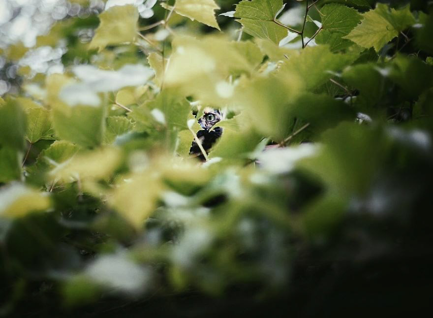 cat peering through leaves
