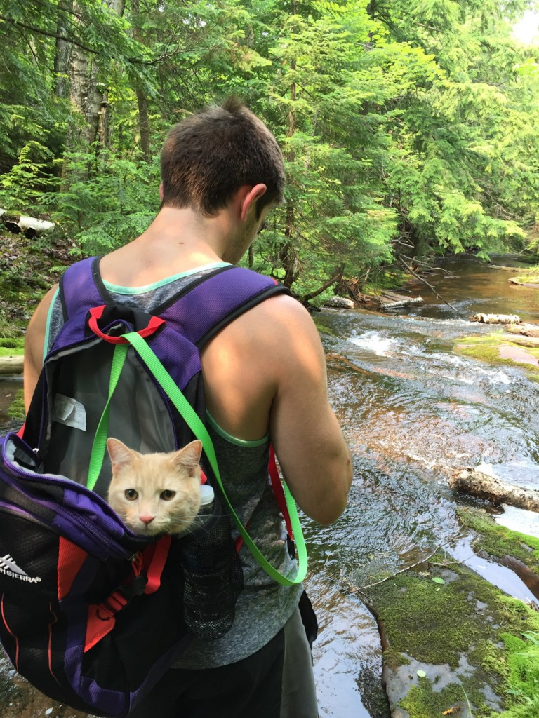 cat riding in hiker's pack