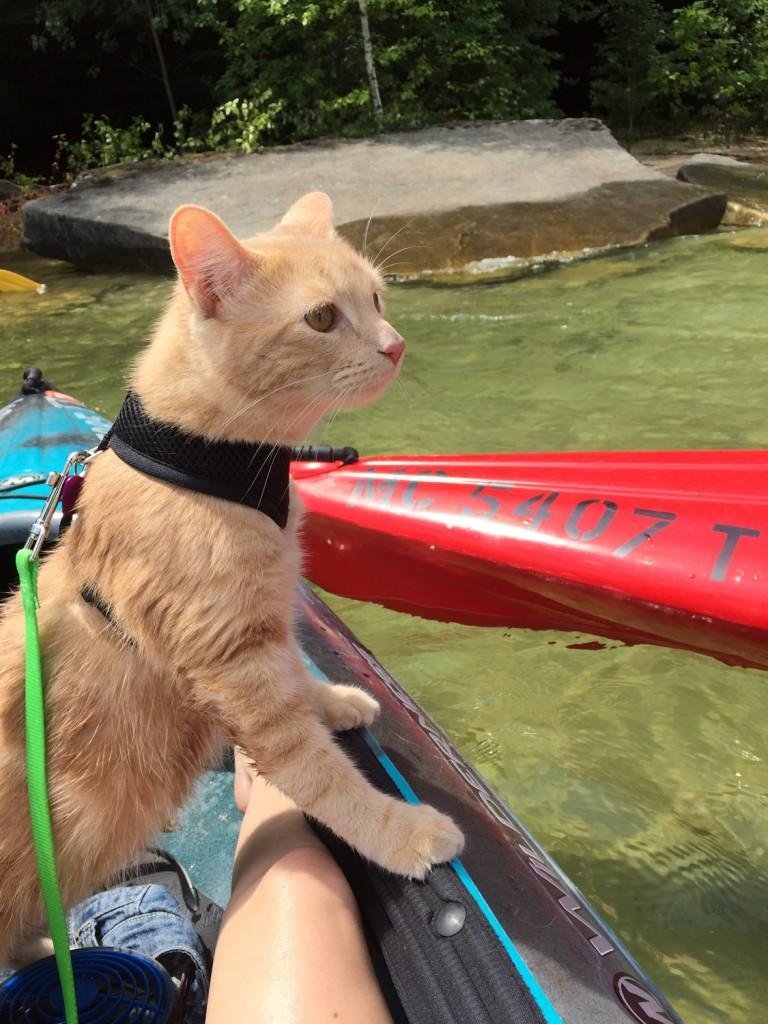 cat riding in kayak