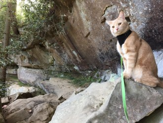Mango the adventure cat