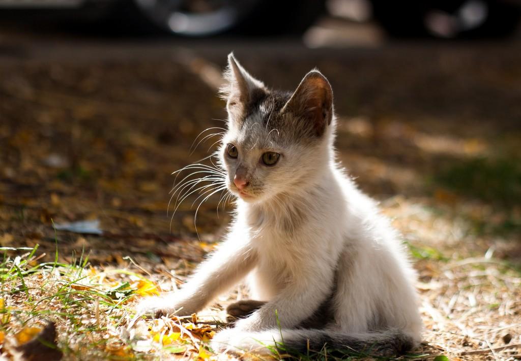 feral kitten