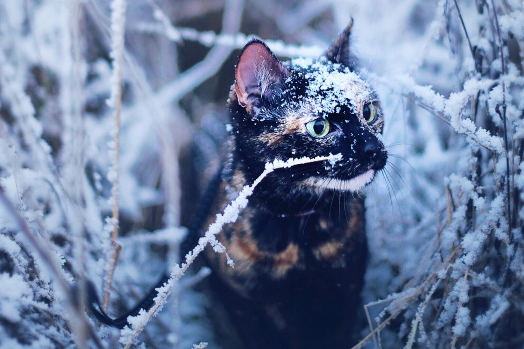 Kate the adventure cat in snow