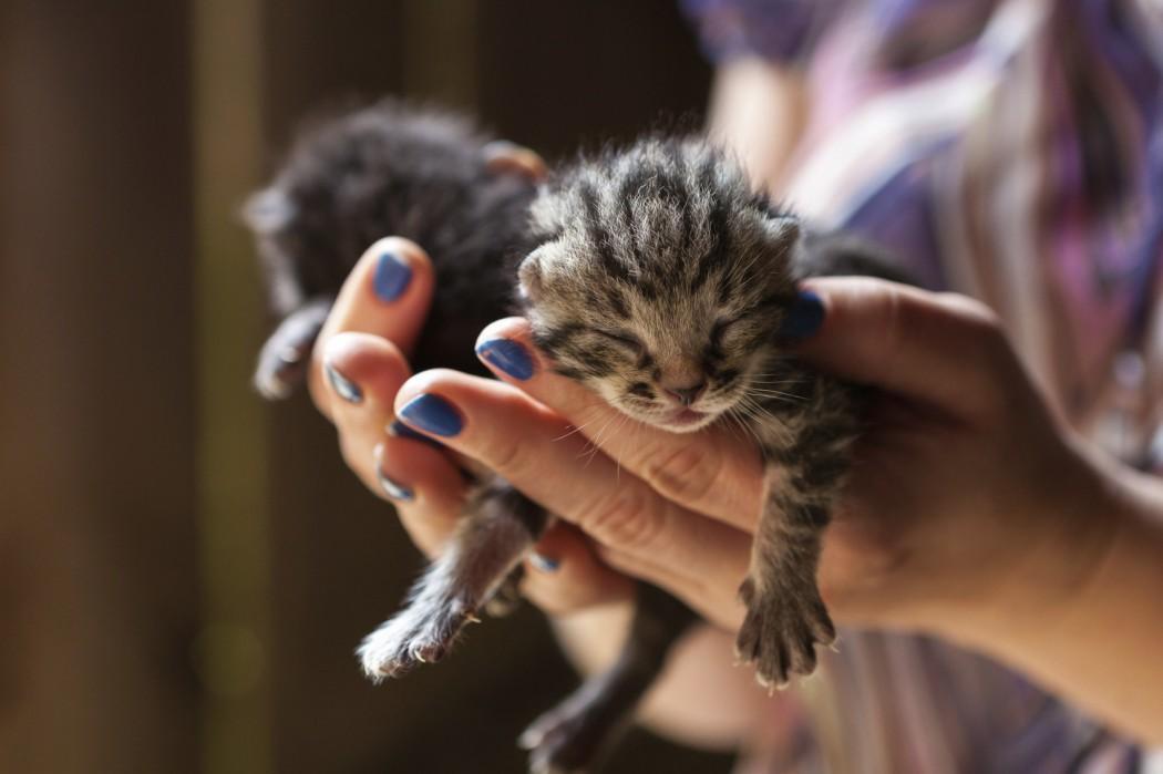 woman holding newborn kittens