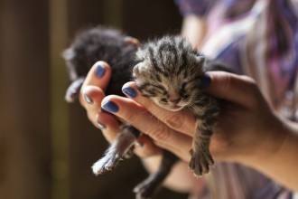 woman holding newborn kittens
