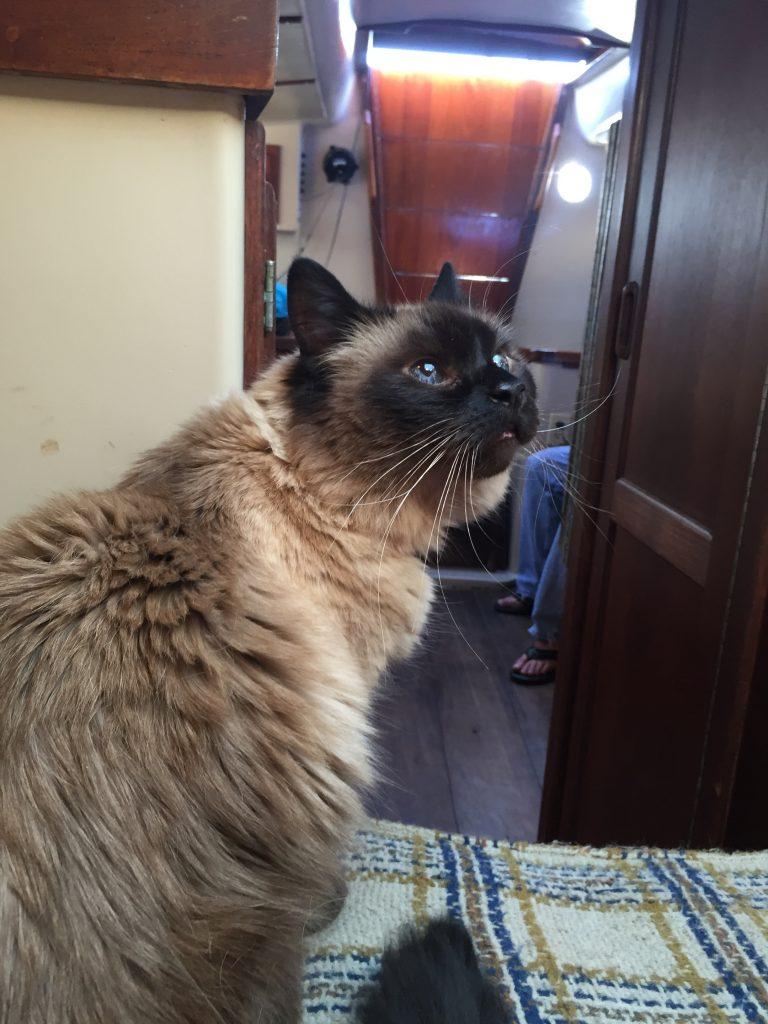 Cat_On_Boat5