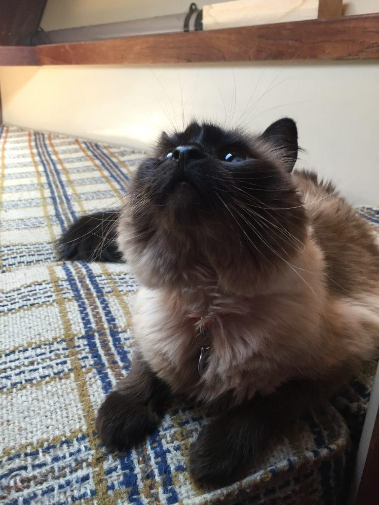 Cat_On_Boat6
