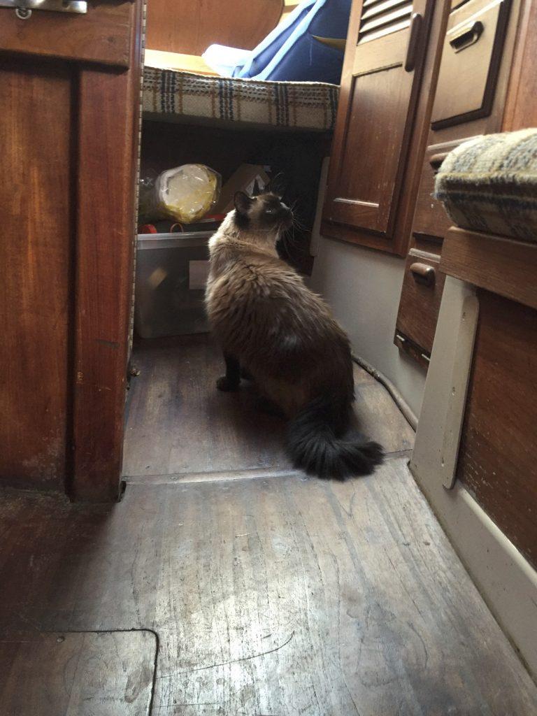 Cat_on_Boat2