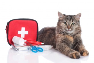 cat first-aid kit