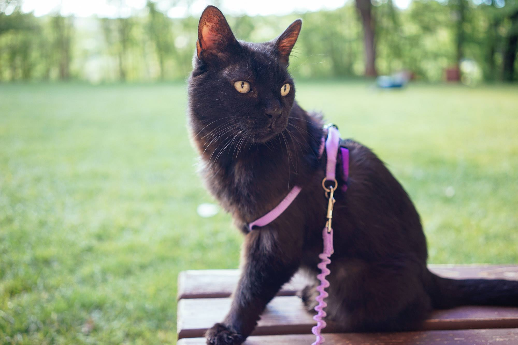 cat hiking at Best Friends Animal Society