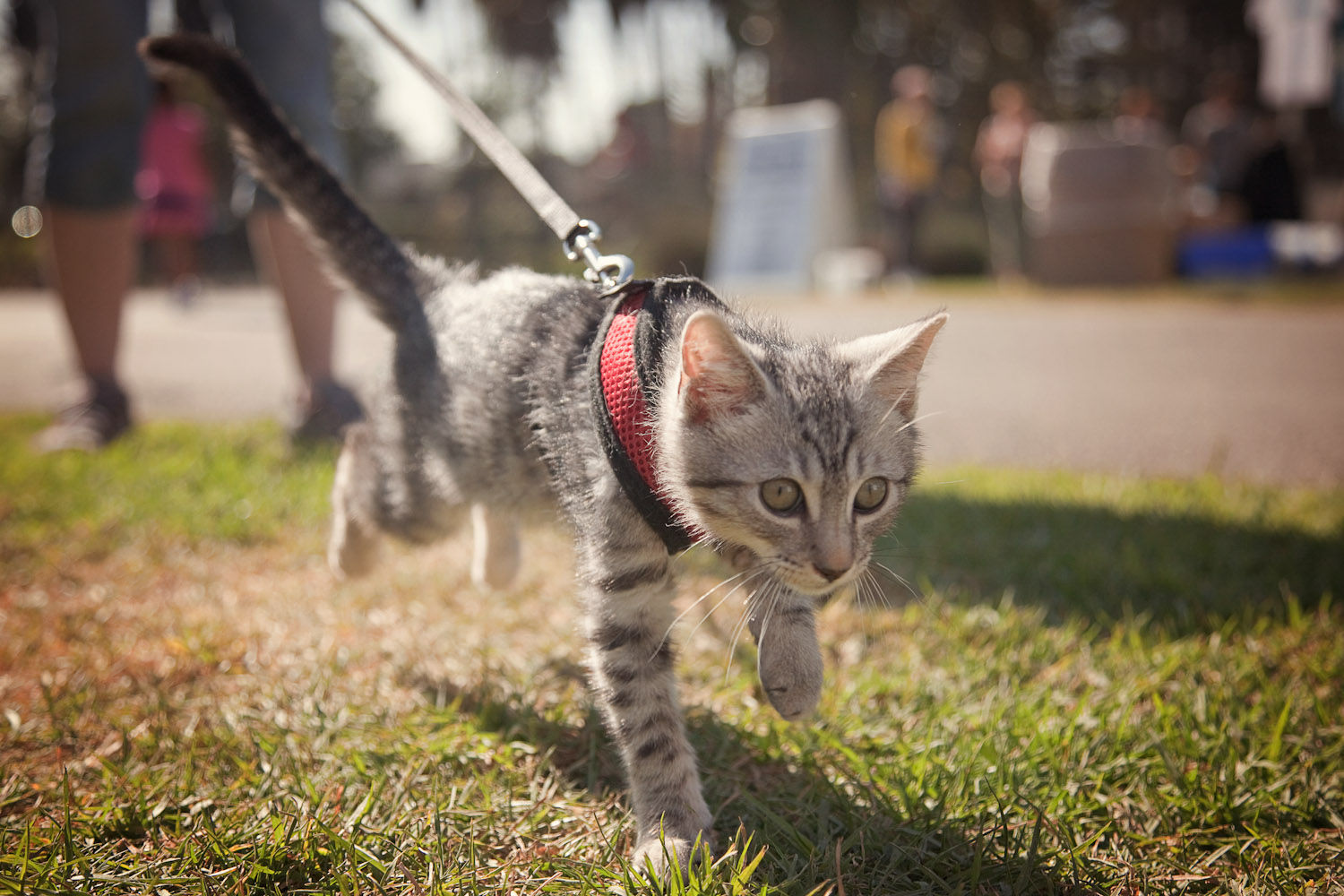 Take A Shelter Cat For A Hike In Utah Adventure Cats