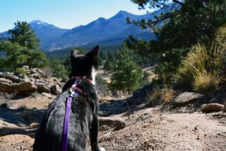 cat hiking in Colorado mountains