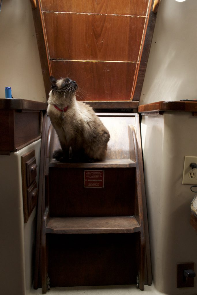 Cat inside of boat