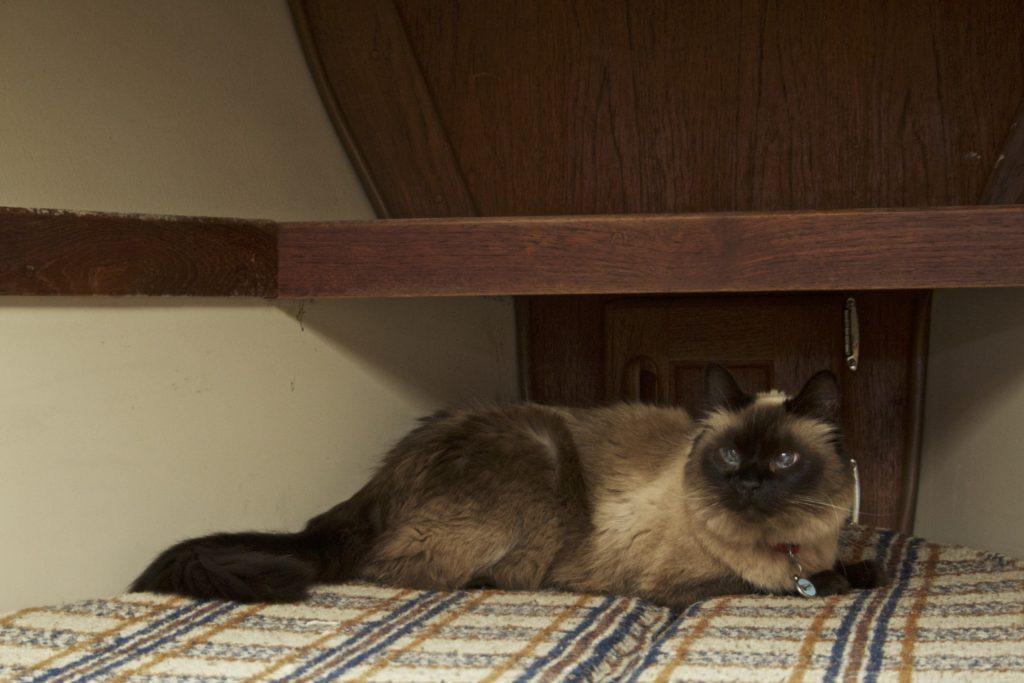 Cat inside boat in sleeping quarter