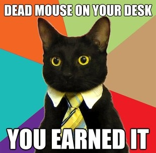 Business cat dead mouse