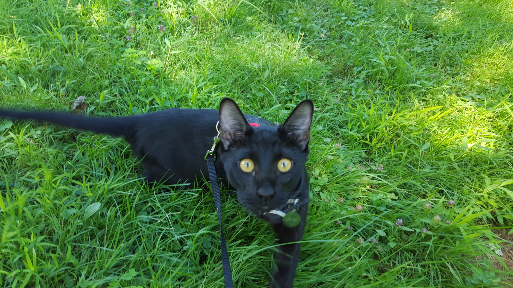 Sirius Black's green eyes pop with the grassy backdrop