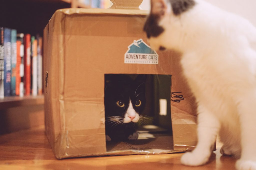 cats playing in box