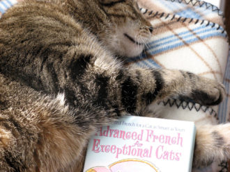 Toff the cat napping with book