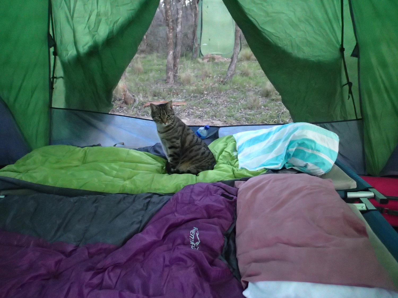 Yoshi cat in tent