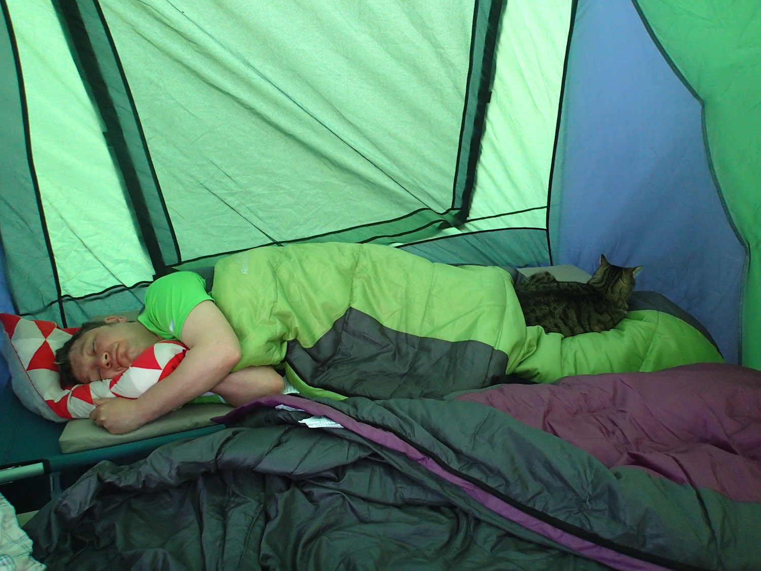 Yoshi cat napping in tent