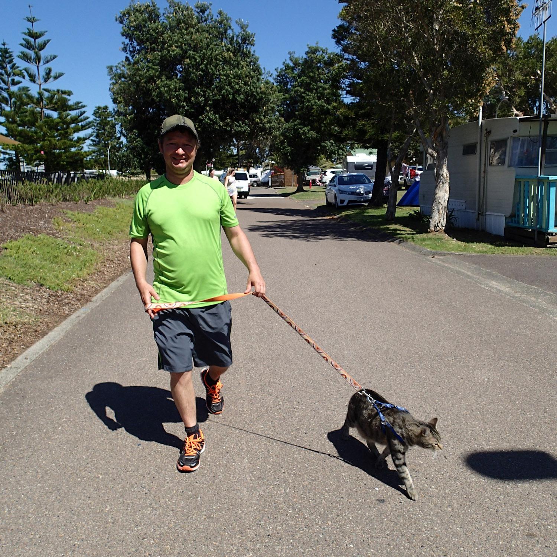 walking cat in Australia