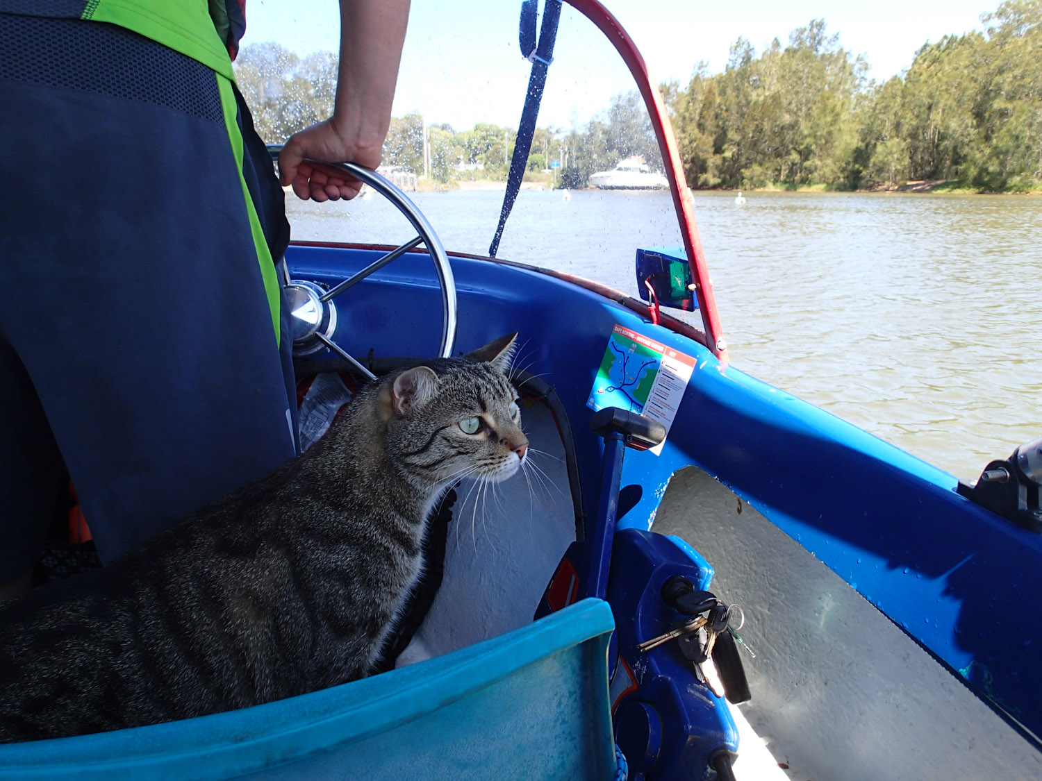 taking cat for ride in boat