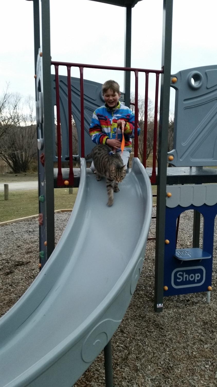 Yoshi cat on slide