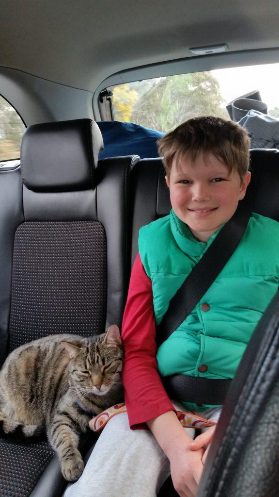 Yoshi cat riding in car