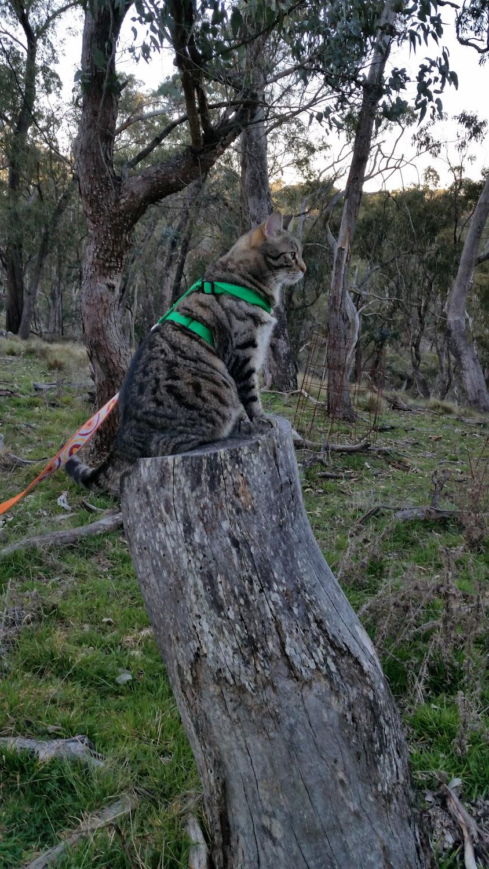 Yoshi cat on stump