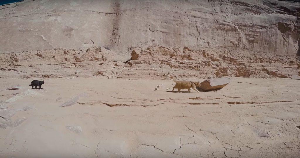 canyon-kitty-adventure-01