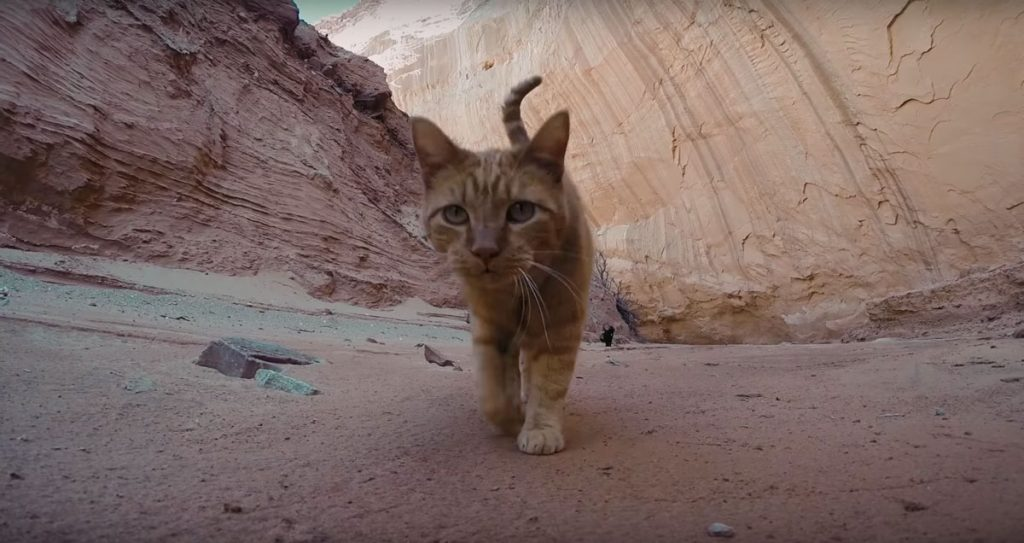 canyon-kitty-adventure-03