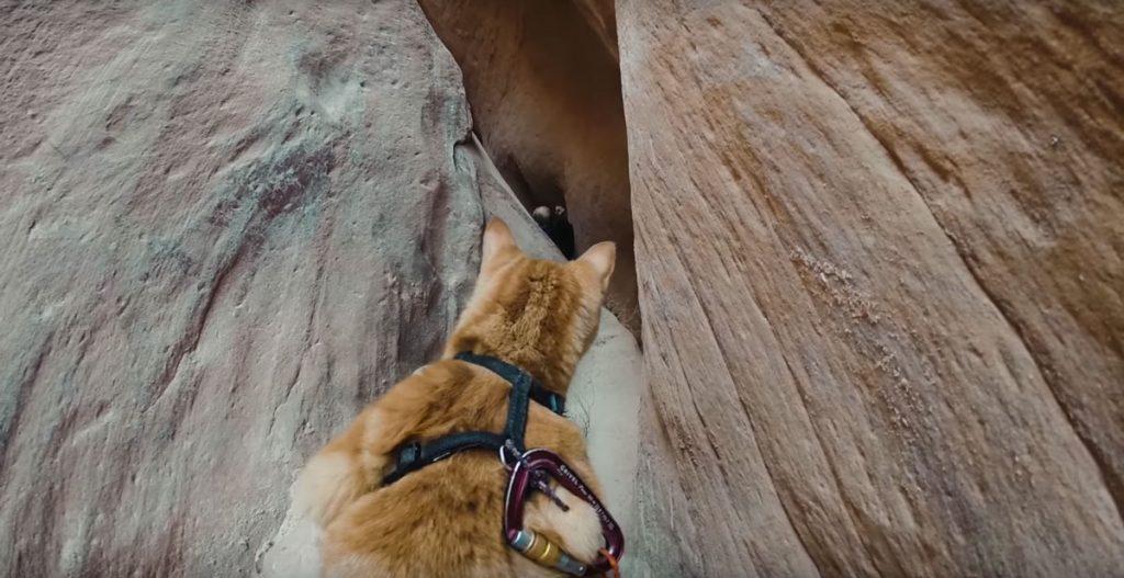 canyon-kitty-adventure-04