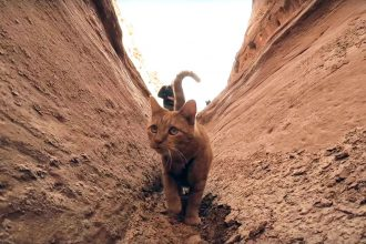 Kenneth cat in Utah canyon