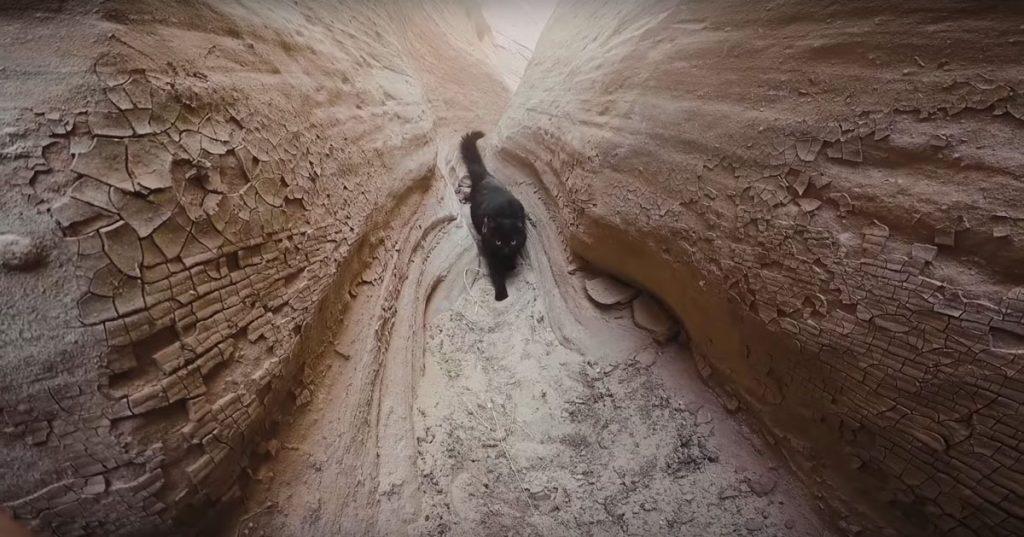 canyon-kitty-adventure-06