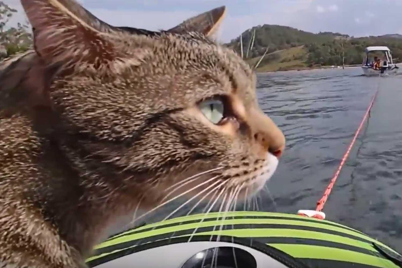 tubing cat