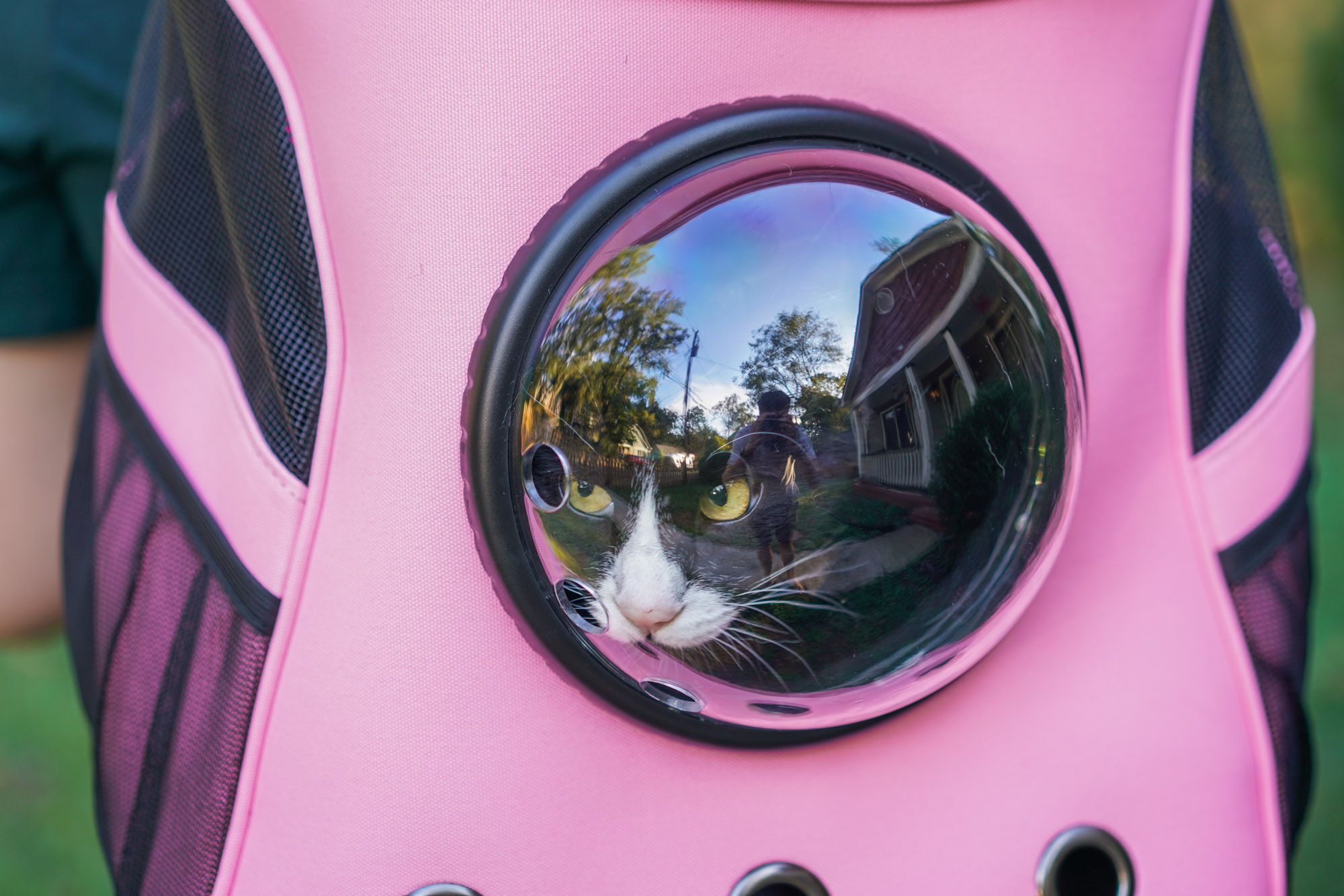 tuxedo cat in pink Fat Cat backpack