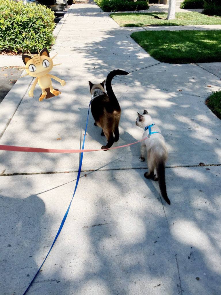 leashed cats hunting Pokemon