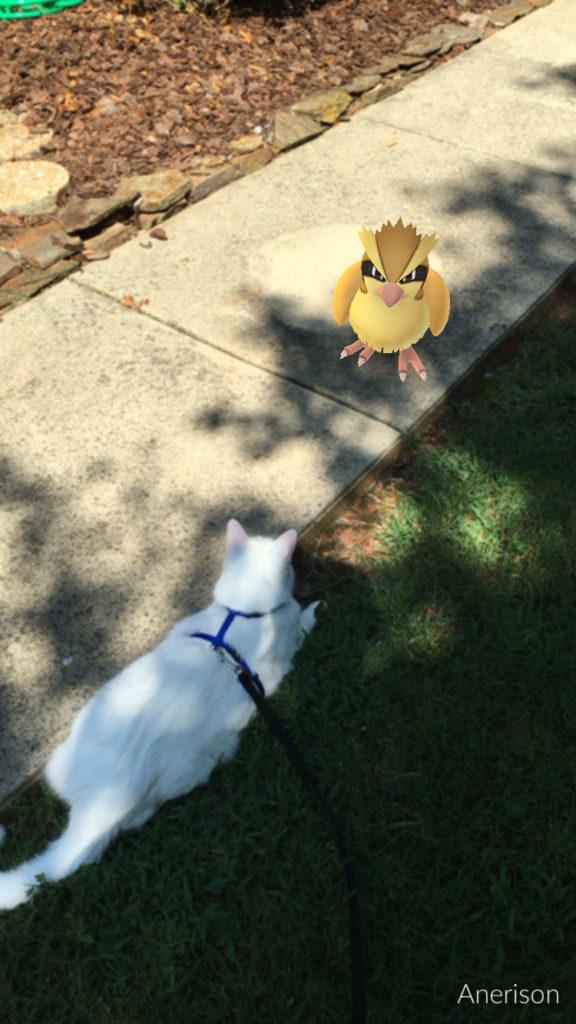 white cat with Pidgey