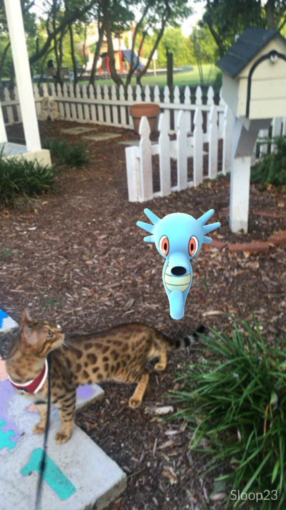 cat with horsea pokemon