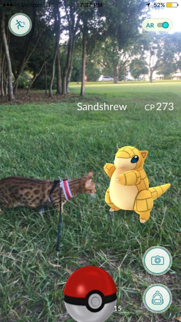 cat with sandshrew Pokemon