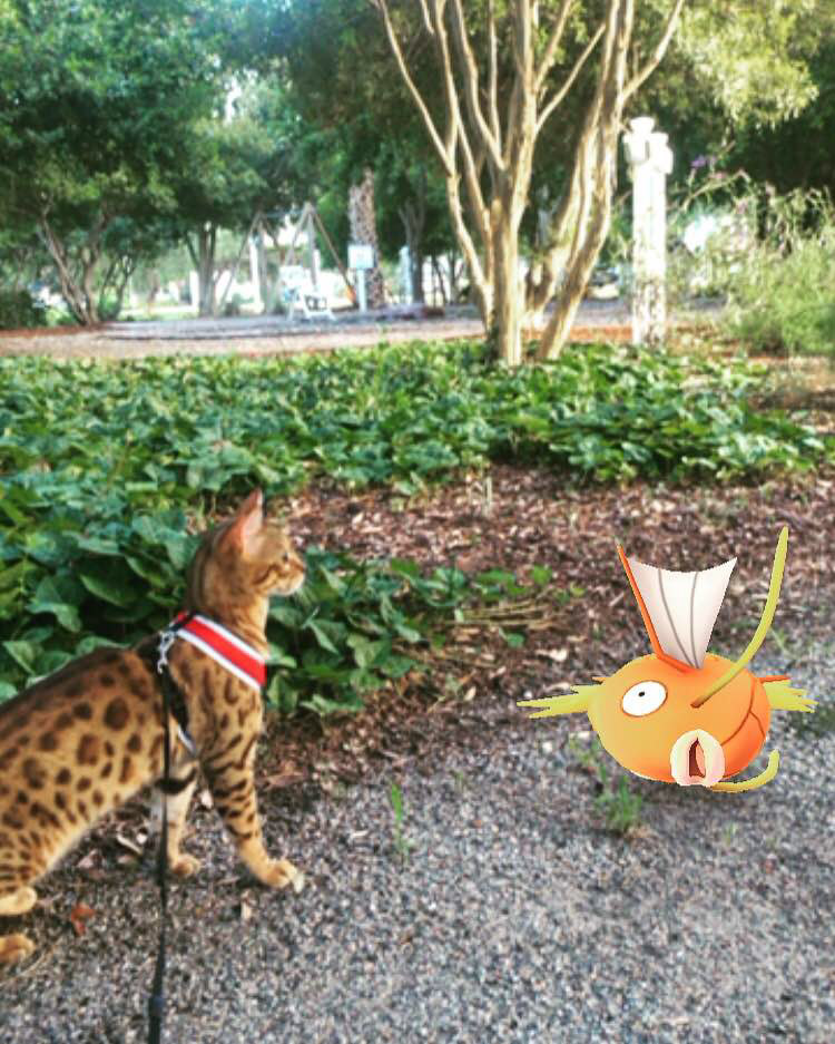 cat with magicarp
