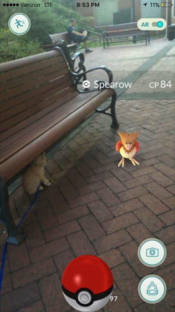 kitten with Spearow Pokemon