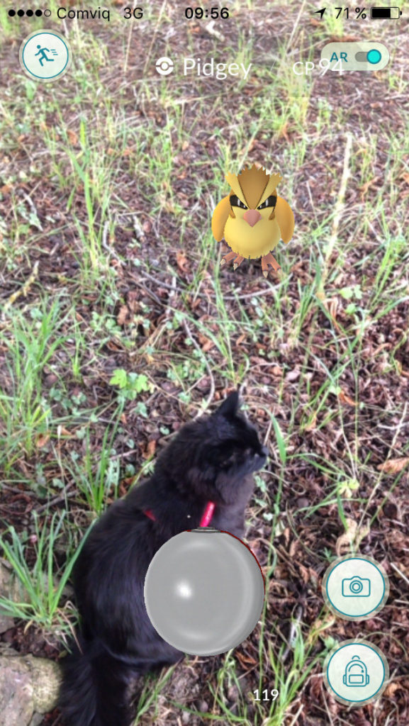 black cat with Pidgey